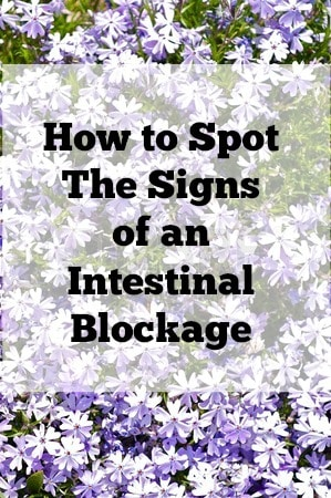 How to Spot The Signs of an Intestinal Blockage from Lauren Kelly Nutrition